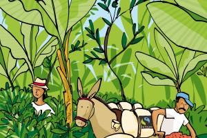 Puro Fairtrade kaffe - Veien til god og rettferdig kaffe1